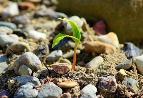 plant  growth  rostock