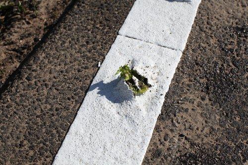 plant  breakthrough  asphalt