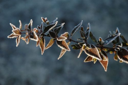 plant winter frost