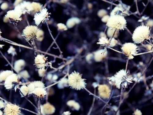 plant soft fluffy