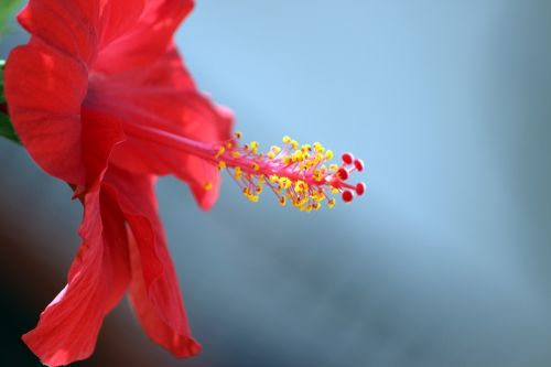 plant macro flowers