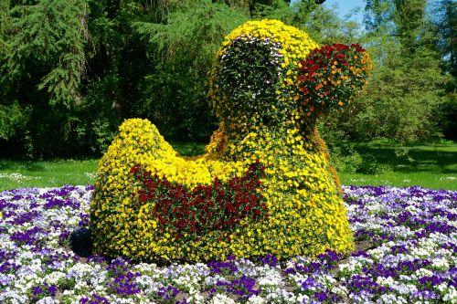 plant flowers mallard
