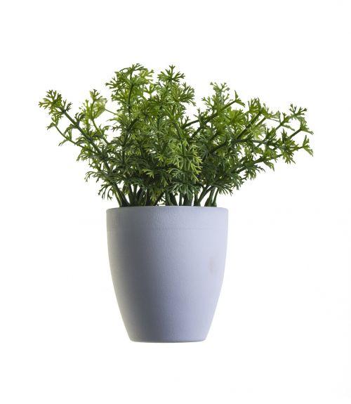 plant green sheet