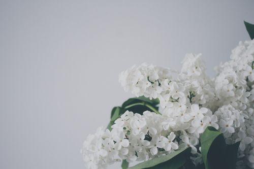 plant natural flower