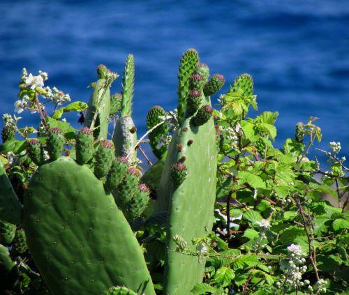 plant sea cactus