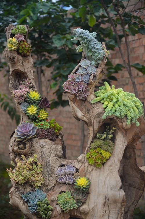 plant succulent plants flower