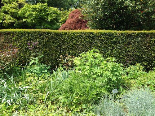 augalas,botanika,sodas,botanikos sodas,botanika grafinė gėlė,flora,gėlės,žalias,sferinis