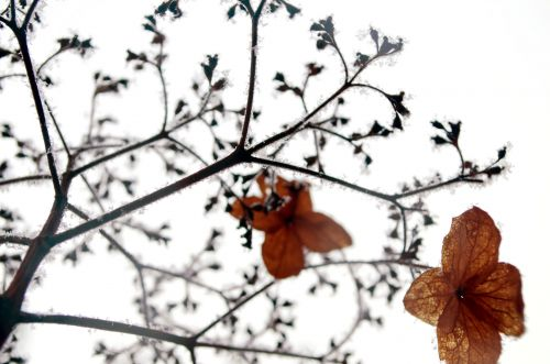 Plant And Winter Seasons