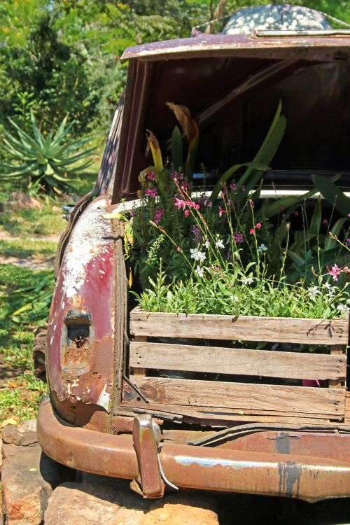 plant boxes in boot of old car car boot