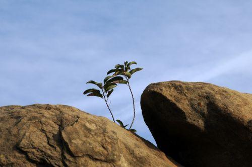 sunkumas, augimas, augalas, Rokas, nevaisinga, žalias, retas, grubus, augalų augimas roko