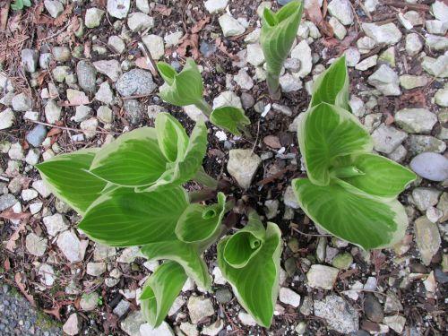 Plant On Rocks