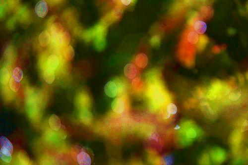 Plant Reflection Bokeh