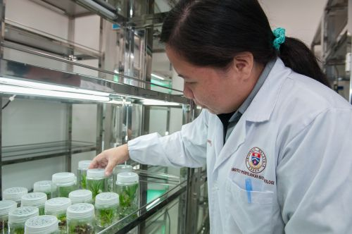 plant tissue culture facility biotechnology research institute universiti malaysia sabah