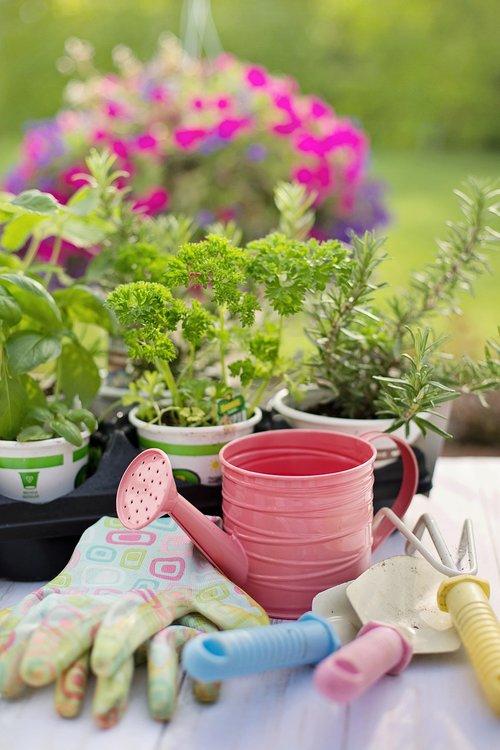 planting  spring  herbs