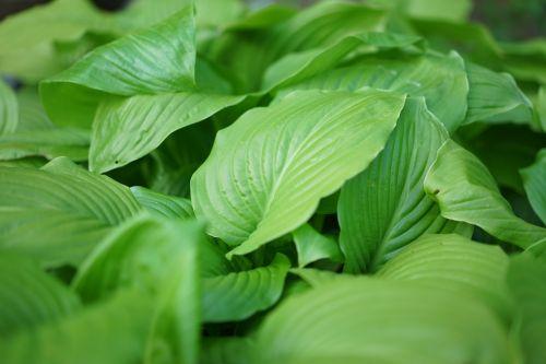 plants basho pattern