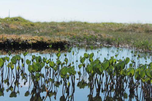 plants water plants peat