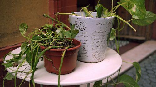 augalai,lauke,sodas,Ispanija,įėjimas,puodai,gamta,žalias,sodininkystė,vasara,pavasaris,galinis kiemas,kiemas,gėlė,puodą,hobis,aplinka,natūralus,apdaila,dekoruoti,gatvė,ispanų,auga