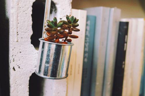 plants cactus potted plant
