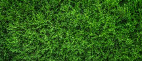 plants leaf nature