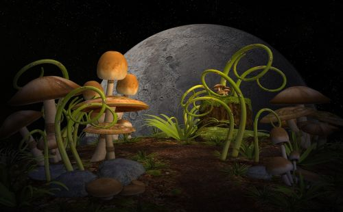 plants mushrooms garden