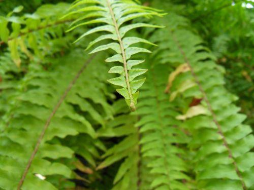 plants wipes leaf