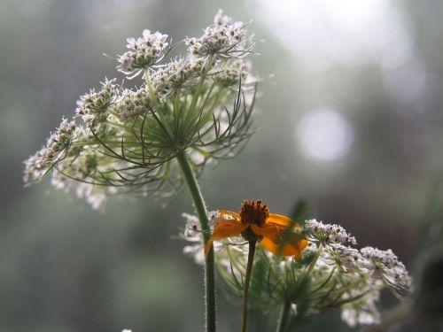 plants garden flowers