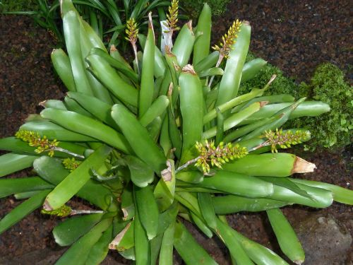 plants natural nature