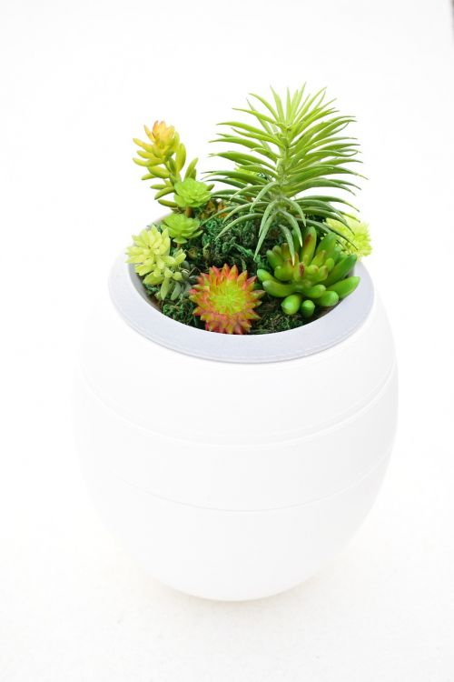 plants urns funeral home ecology
