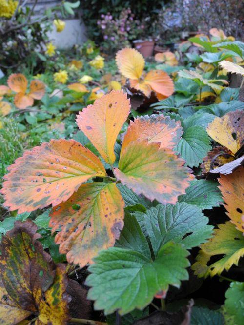 plants garden faded