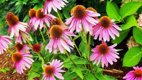 plants flowers flowering plants