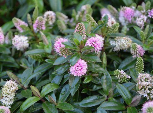 plants flowering plant green foliage