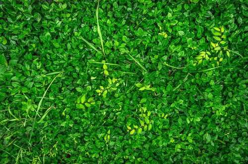 plants  green  nature