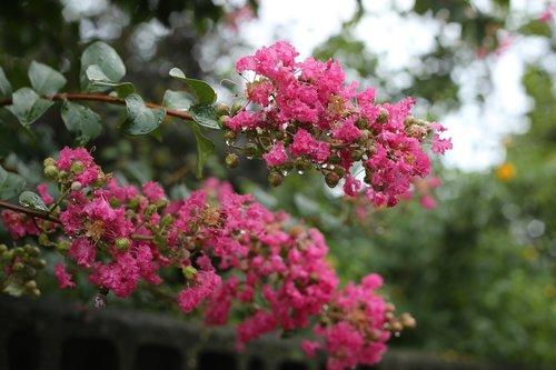 plants  flowers  nature