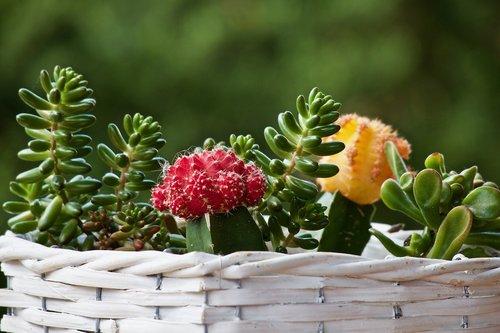 plants  fat plants  cactus
