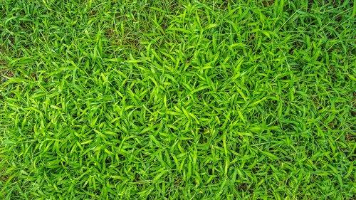 plants  grass  nature