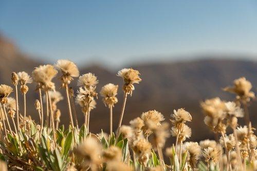 plants  flowers  dry