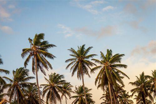 plants palm trees