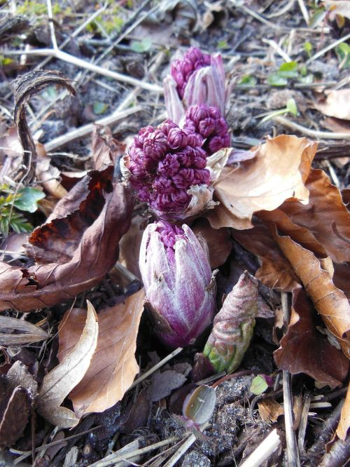 plants nature spring