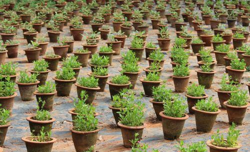 plants bangalore green