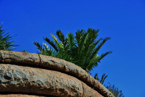 Plants Atop Granite Wall