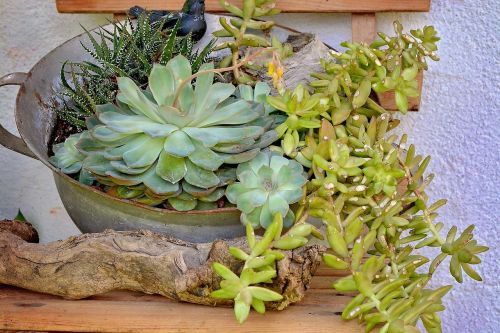 plants for planting bowl metal bowl