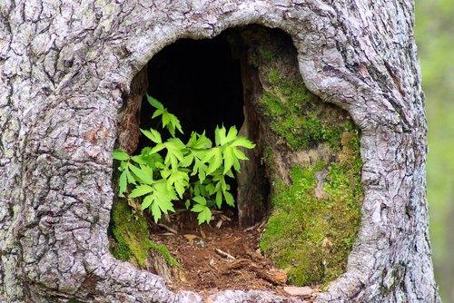plants in hollow tree  tree  trunk