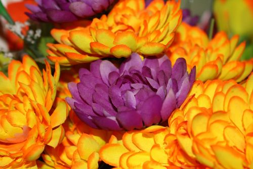 plastic flowers the brightness