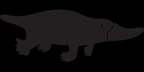 platypus icon monotreme platypus