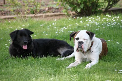 play dogs rush