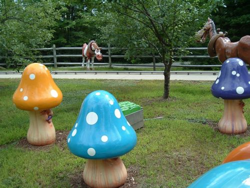 playful mushrooms fun