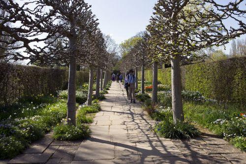 pleached trees avenue stone path