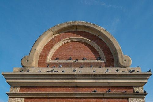 plinth  pigeon  brick