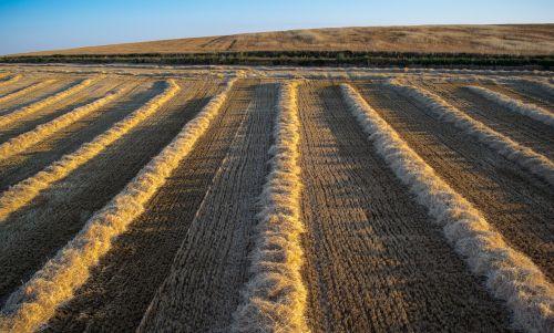 plow fields grooves