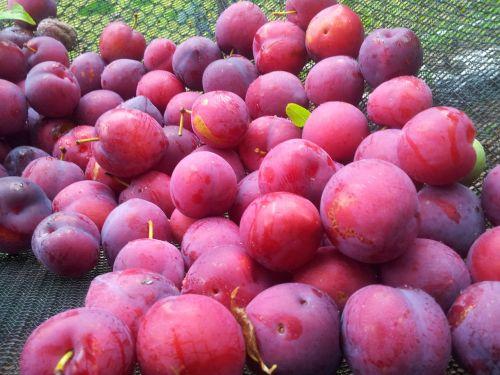 summer summer days fruit